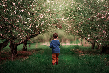 A small boy walking through an apple orchard