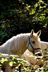 Horse near Drift Creek. Oregon.