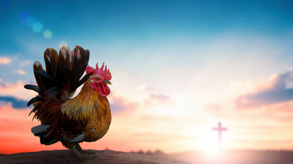 Peter denies Jesus concept: rooster on blurred beautiful sunrise sky with cross background