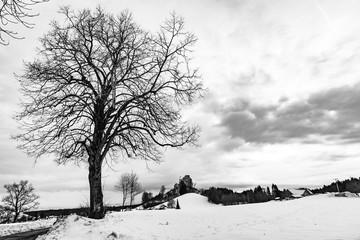 Winter mit Schnee und Baum im Allgäu