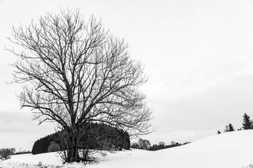Verschneiter kahler Baum im Winter