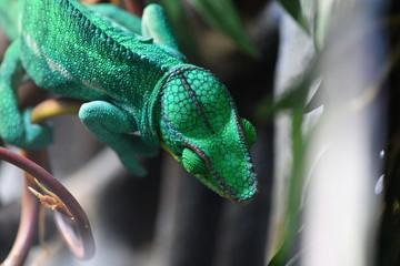 tropical reptiles in a terrarium Wall mural