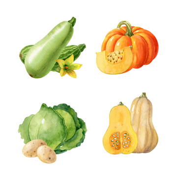 Collection of watercolor vegetables isolated on white background. Autumn harvest, food illustration of pumpkin, cabbage, squash, potatoes. Hand-drawn clipart.