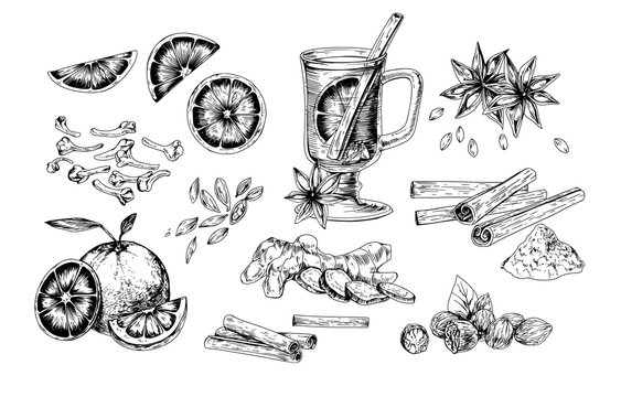 Mulled wine and spices realistic vector illustrations set. Flavoring seeds and herbs hand drawn isolated cliparts pack. Winter traditional hot drink ingredients. Ginger root, oranges, star anise.