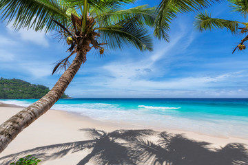 Foto op Aluminium Strand Tropical Beach. Sandy beach with palm and turquoise sea. Summer vacation and tropical beach concept.