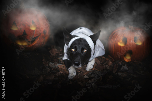 Dog at Halloween. Dog with pumpkin. Tricke or treat.