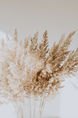 Beige reeds agains white wall. Beautiful pattern with neutral colors. Minimal, stylish, trend...
