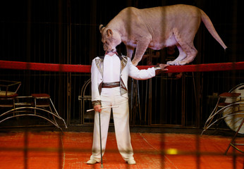 Big cat tamer Vitaliy Smolyanets performs with a lioness in Donetsk