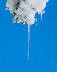 Einzelner Eiszapfen vor blauem Hintergrund