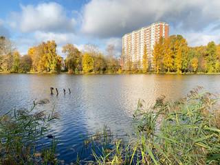 Moscow region, Balashikha city. The Pekhorka river in the fall