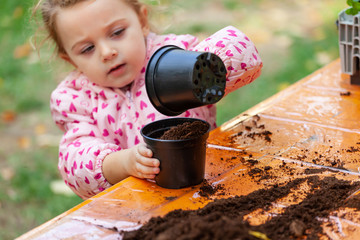 View of toddler child planting young beet seedling in to a fertile soil.
