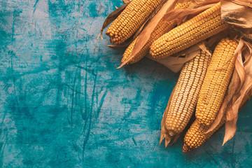 Harvested corn on the cob on grunge blue background