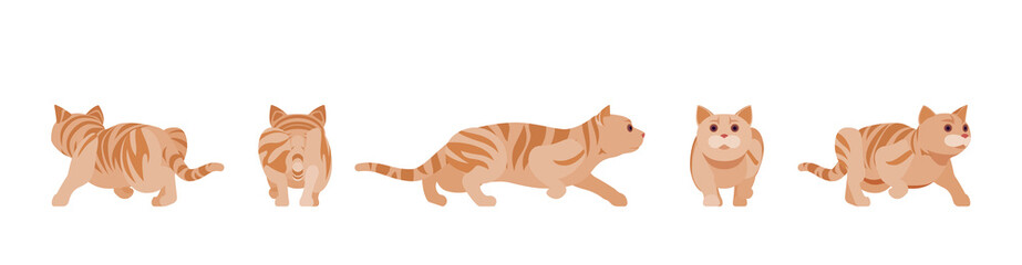 Ginger Tabby Cat sneaking and stalking. Active healthy kitten with orange, red, yellow-colored fur, cute funny pet. Vector flat style cartoon illustration isolated on white background, different views