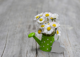 Daisy bouquet in green watering can. Holiday card with flowers. Valentines day background. Gift for mothers day.
