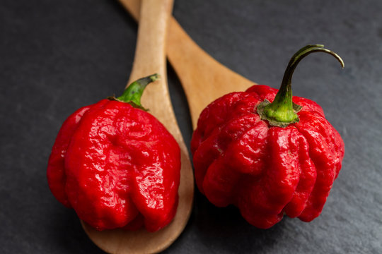 Hottest pepper in the world. Trinidad Scorpion Butch, thousands of times more spicy than Havana. On black slate background, with natural light. Spicy dark food food concept.