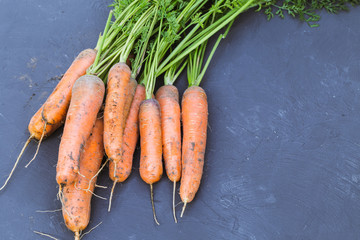 Fresh bunch of carrots on a black background