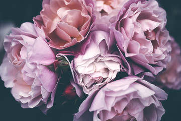 Bouquet of pink roses close up, toned, soft focus. Floral vintage background.