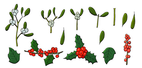 colored christmas set vector that consists of mistletoe and holly.