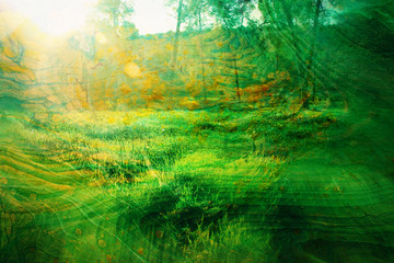 art concept of double exposure in nature. forest and fall colors