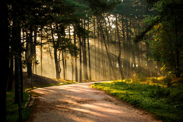 Forest in autumn with way and sun rays