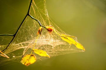 spider web with intertwined threads