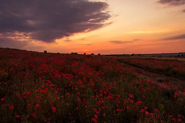 Printed kitchen splashbacks Lotus flower Poppy field at sunset, warm light