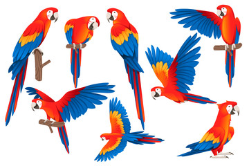 Set of adult parrot of red-and-green macaw Ara (Ara chloropterus) cartoon bird design flat vector illustration isolated on white background Fotomurales