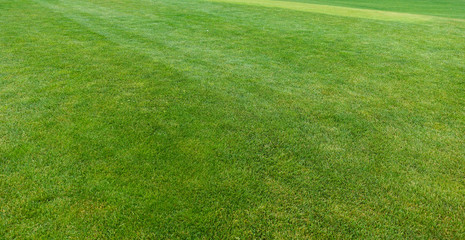 Green lawn with trimmed grass