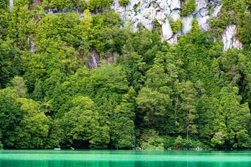 small lake with green algae