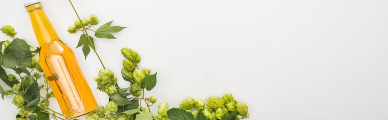 top view of yellow beer in bottle with green hop on white background, panoramic shot