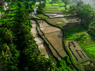 Rice terraces on the mountain Ubud, Aerial view