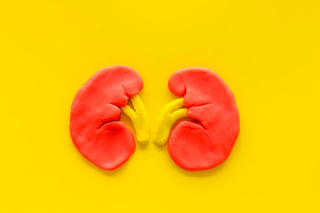 Kidney healthy. Organ on yeloow background top view