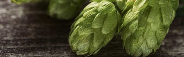 close up view of organic green hop on wooden table, panoramic shot Wall mural