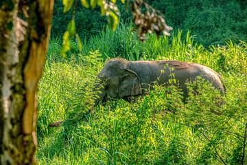 Thai elephant at the tree