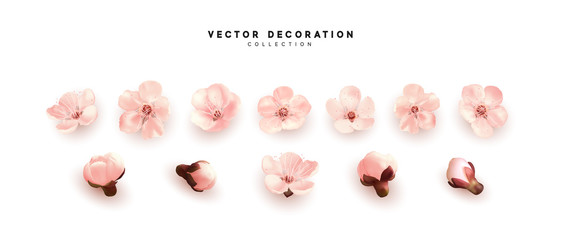 Flower flowering against isolated on white background. Blooming flower buds. Design of realistic pink floral buds.