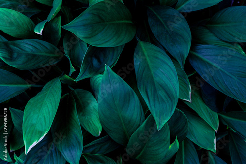 Wall mural abstract green leaves pattern texture, nature background, tropical leaves