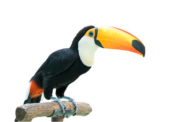 Keuken foto achterwand Toekan Colorful Toucan Bird Profile photo
