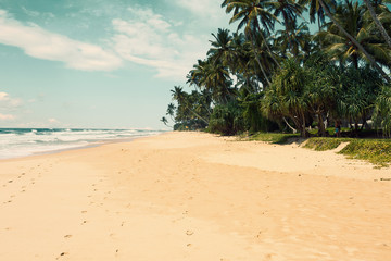 Wall Mural - Tropical beach with  palm trees. Toned image