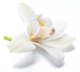 Spoed Fotobehang Orchidee Vanilla orchid vanilla flower isolated on white background.