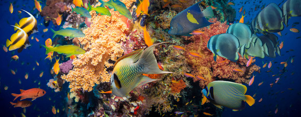 Wall Murals Coral reefs Coral and fish
