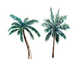 Watercolor isolated palm tree. Hand drawn illustration