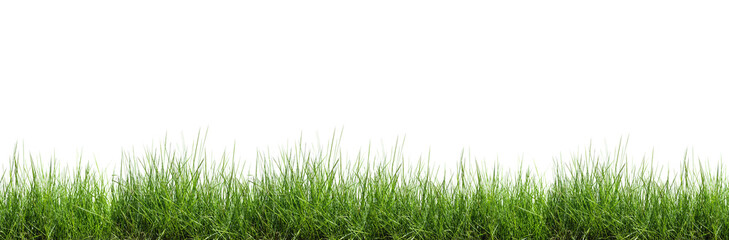 Tuinposter Gras Grass isolated on white background