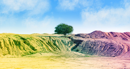 Photo sur Aluminium Jaune de seuffre green tree in a desert canyon