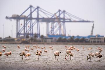 Large flock of pink flamingos in Walvis Bay, Namibia
