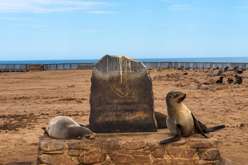 Seals at the Cape Cross Seal Reserve in Skeleton Coast, Namibia