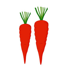 Two Carrots - Cartoon Vector Image