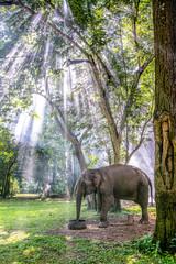 Thai elephant eating near the tree