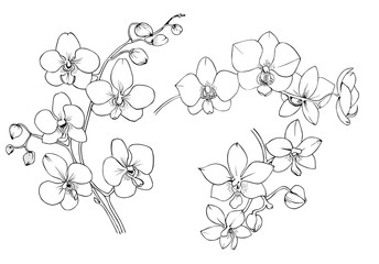 Orchid black and white vector drawing