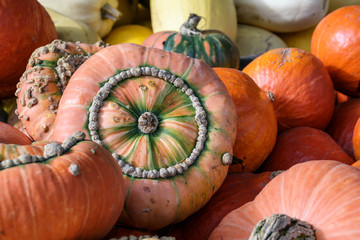 various pumpkins in autumn as food and decoration for halloween and thanksgiving