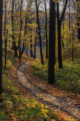 Old paved walkway through an autumn landscape park, Tsaritsyno park in Moscow, Russia
